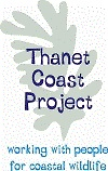Thanet Coast Protection